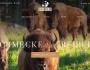 Neue Webseite mit Onlineshop